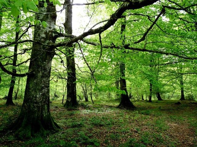 Forêt de Mazouau
