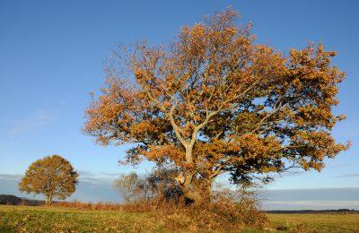 Un arbre dans les Baronnies