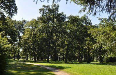 Forêt La Plantade