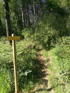 Sentier tourbiere clarens 6